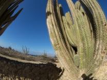 Cactus Alto Vista Chapel, Noord, Aruba, © 2016 Bob Hahn, Olympus OM-D OLYMPUS 8mm Lens at 8 mm, ISO: ISO 200 Exposure: 1/500@f/9