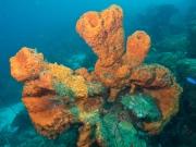 De Palm Slope, Oranjestad, Aruba, © 2016 Bob Hahn, Olympus OMD/E-M1 OLYMPUS M.12-40mm F2.8 at 12 mm, ISO: ISO 400 Exposure: 1/125@f/7.1