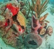 Barcadera Reef, Oranjestad, Aruba, © 2016 Bob Hahn, Olympus OMD/E-M1 OLYMPUS 8mm Lens at 8 mm, ISO: ISO 400 Exposure: 1/125@f/10