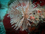 Bali Reef, Oranjestad, Aruba, © 2016 Bob Hahn, OLYMPUS M.12-40mm F2.8 at 40 mm, ISO: ISO 400 Exposure: 1/160@f/8