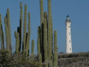 #BobHahnPhoto #GetOlympus #Aruba #CaliforniaLighthouse #Nature #Caribbean #Noord #Cactus