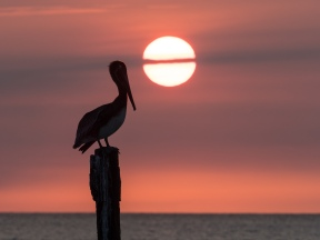 #BobHahnPhoto #GetOlympus #Aruba #Sunset #Beach #Nature #Oranjestad #Caribbean #DruffBeach