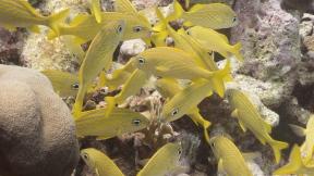 #BobHahnPhoto #GetOlympus #Oranjestad #Caribbean #Underwater #ScubaDiving #FrenchGrunt
