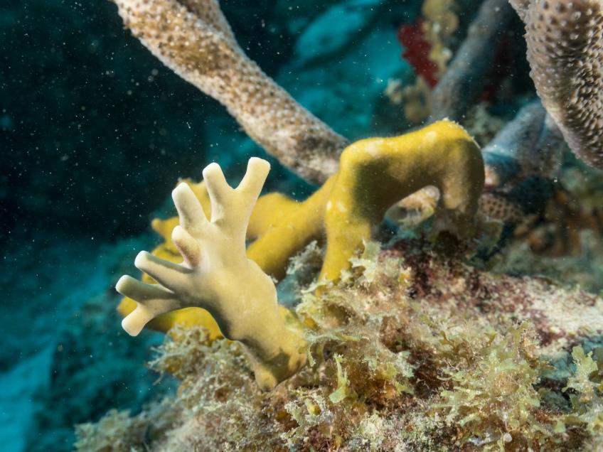 #BobHahnPhoto #GetOlympus #Oranjestad #Caribbean #Underwater #ScubaDiving #Coral