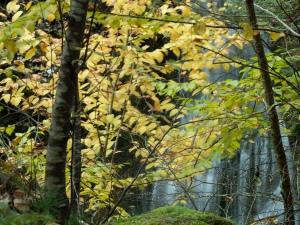 #BobHahnPhoto #GetOlympus #Nature #RaymondskillCreek #Waterfalls #DelawareWaterGapNationalRecreationArea