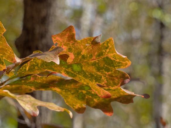 #BobHahnPhoto #GetOlympus #Nature #Nazareth #JacobsburgStatePark #FallFoliage #PA