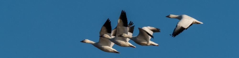 #BobHahnPhoto #Birds #GetOlympus #Bethlehem #PA #Nature #Animals