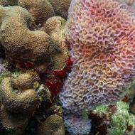 Coral De Palm Reef, Oranjestad, Aruba © 2020 Bob Hahn, Olympus OM-D/E-M1 Mark ll Olympus M.12-40mm F2.8