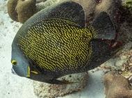 Barcadera Reef, Oranjestad, Aruba © 2020 Bob Hahn, Olympus OM-D/E-M1 Mark ll Olympus M.12-40mm F2.8