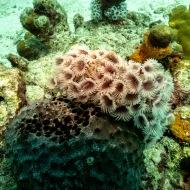 Fower Coral Harbor Reef, Oranjestad, Aruba © 2020 Bob Hahn, Olympus OM-D/E-M1 Mark ll Olympus M.12-40mm F2.8
